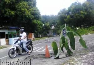 Pisang yang ditanam warga di Jalan Adam Malik, Kabupaten Natuna.