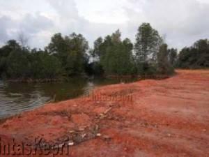 Terlihat tanah timbunan melahap hutan mangrove di Tekojo Bintan