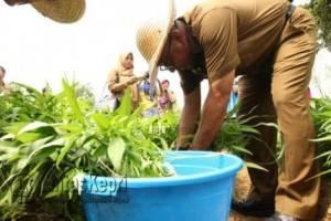 Walikota Tanjungpinang Lis Darmansyah panen sayur