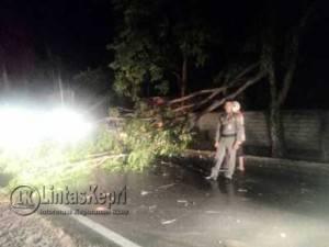 Inilah pohon akasia yang patah dan nyaris menimpa seorang pengendara sepeda motor di Jalan RH Fisabililah, Rabu (25/05) malam.