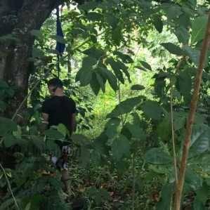 Yanto Supriyanto (32) saat ditemukan Polres Tanjungpinang, tewas tergantung di dahan pohon nangka, Kebun Wagiman, Tempat Pembuangan Akhir (TPA) Sampah, Jalan Ganet, Sabtu (25/6)