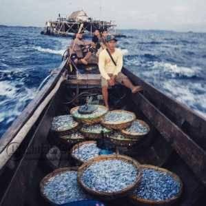 Jang, Nelayan Kelong Apung bersama puluhan Bilis Lobak, di laut Berakit Kabupaten Bintan, Sabtu (16/4).